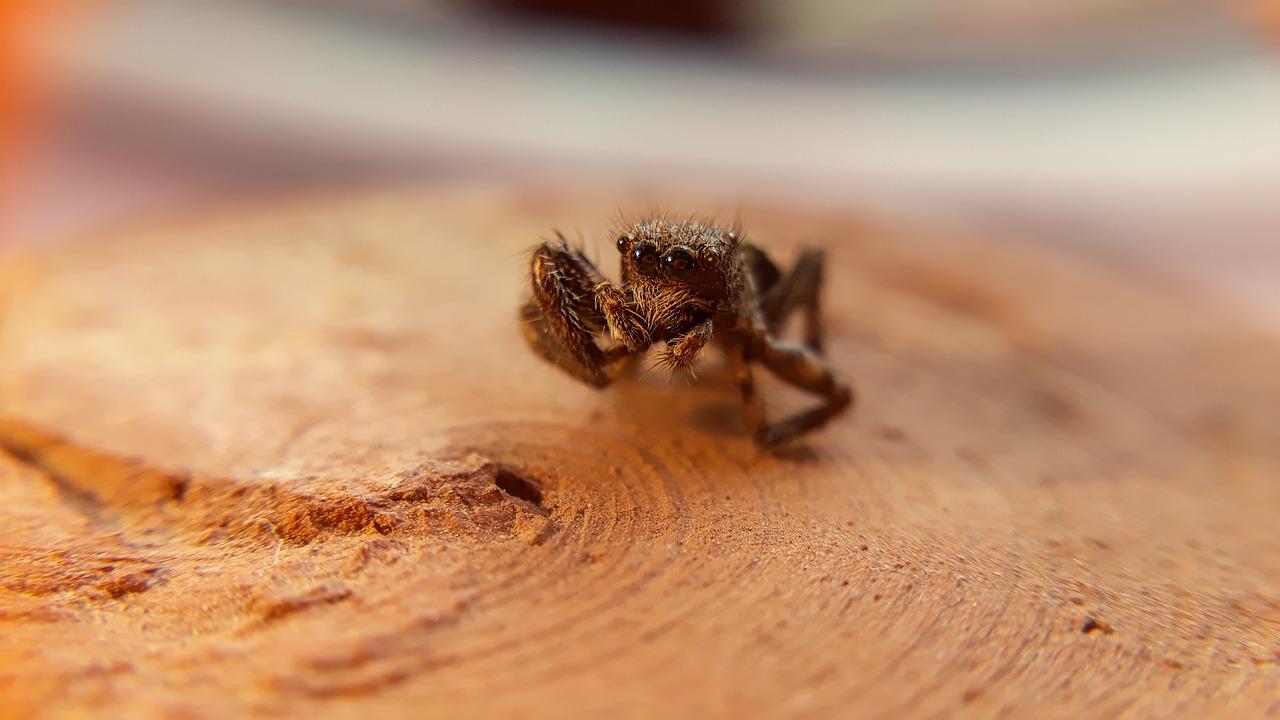 Little closeup wildlife macro
