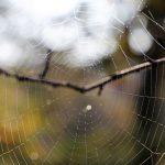 Morning spider net cobweb branch
