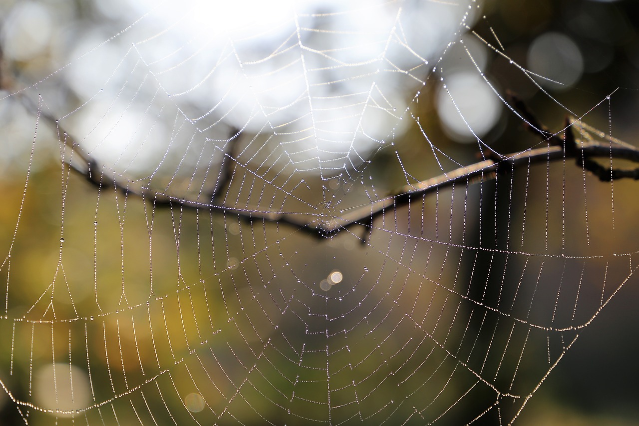 Morning spider net cobweb branch