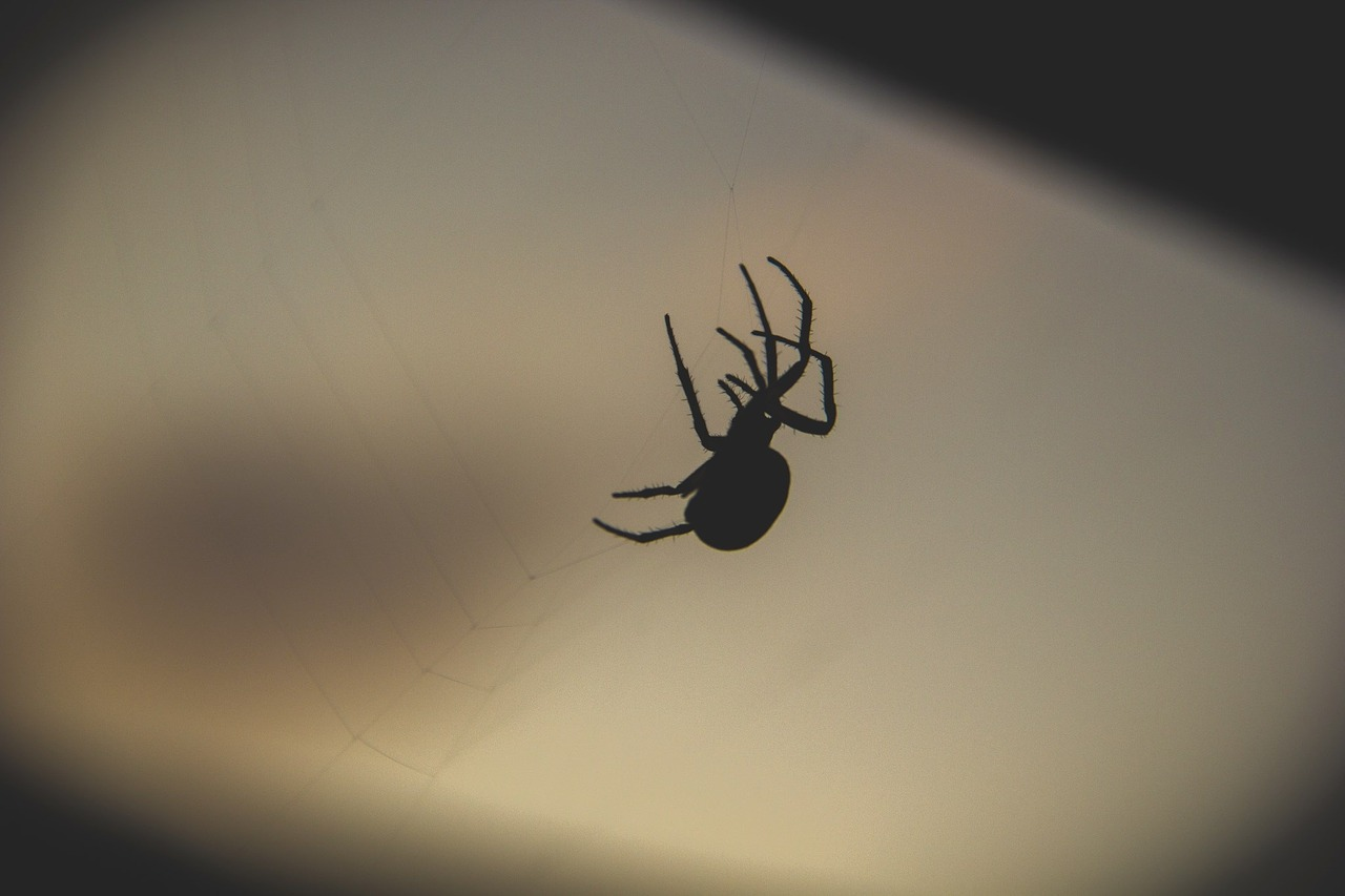 Night dark fall spider