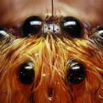 Spider insect 8 eyes macro