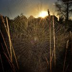 Spiderweb spider trap intricacy