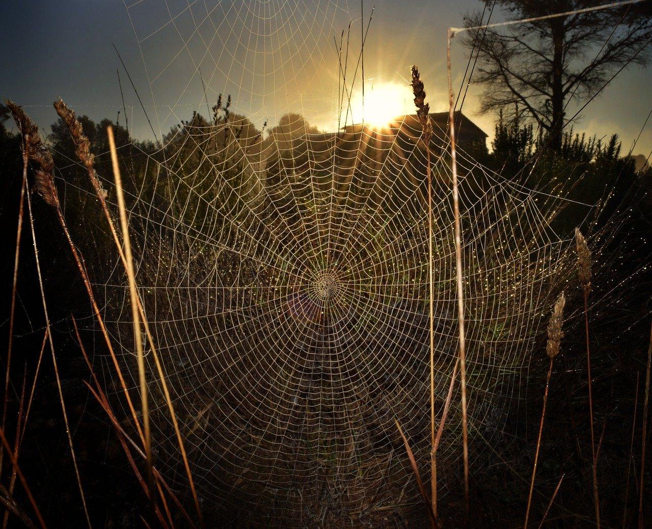 Spiderweb spider trap intricacy
